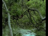 ��������: ������� ������ ����� / AMAZONIA: THE CATHERINE MILES ST...